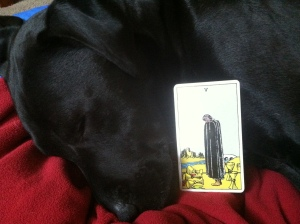 My dog, Ollie, models the grief of the 5 of Cups.