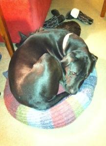 Ollie the Aloofish Dog