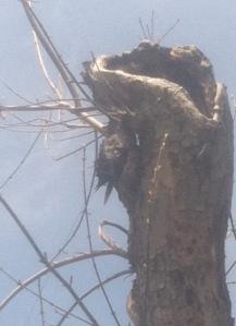 struggling bird